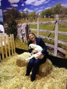 agneau-lot